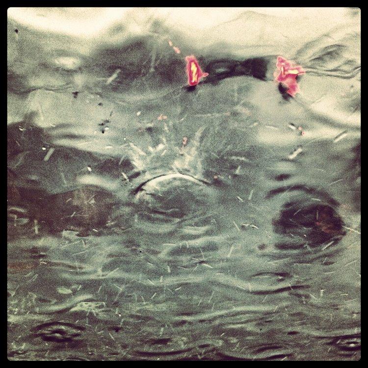 raining hippos - 13 mar 2012
