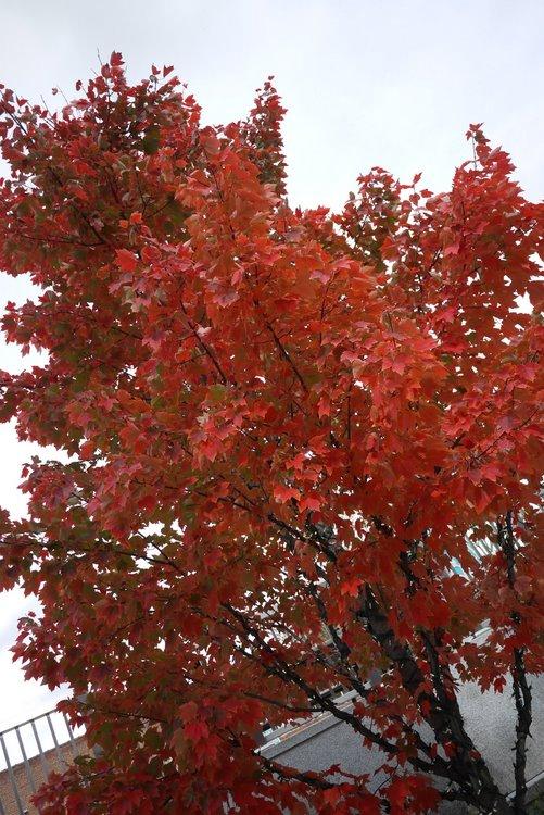 autumn - 9 nov 2011