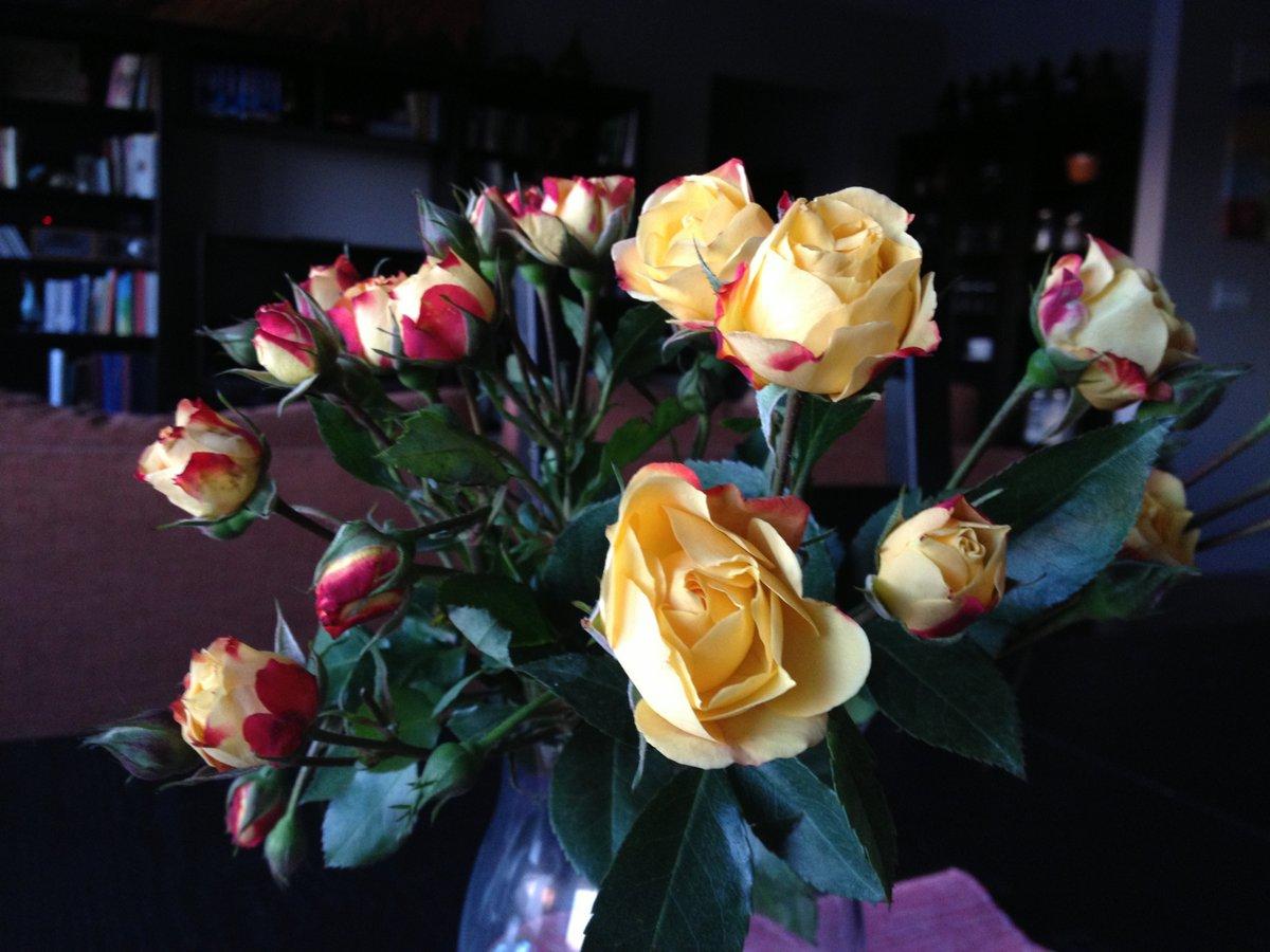 flowers - 7 jan 2014