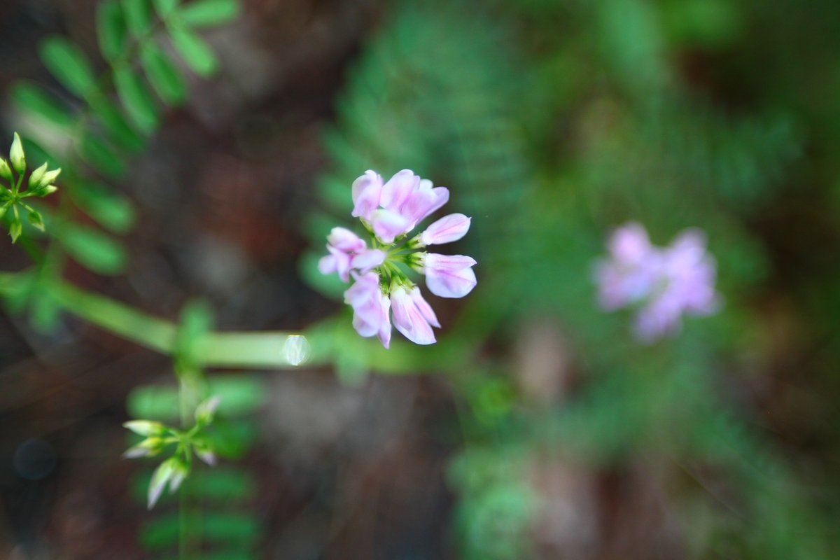 flowers - 31 may 2014
