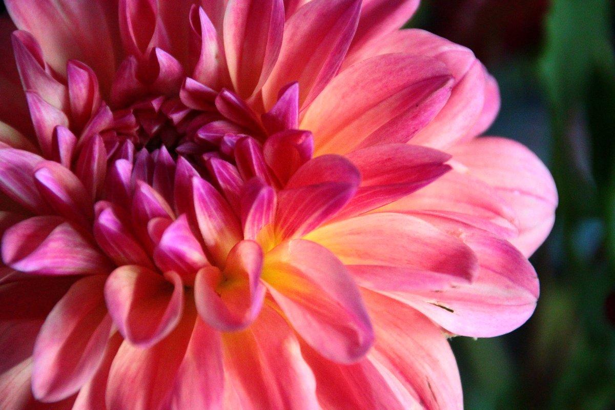 flowers - 2 aug 2014