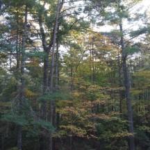 leaves - 24 oct 2014