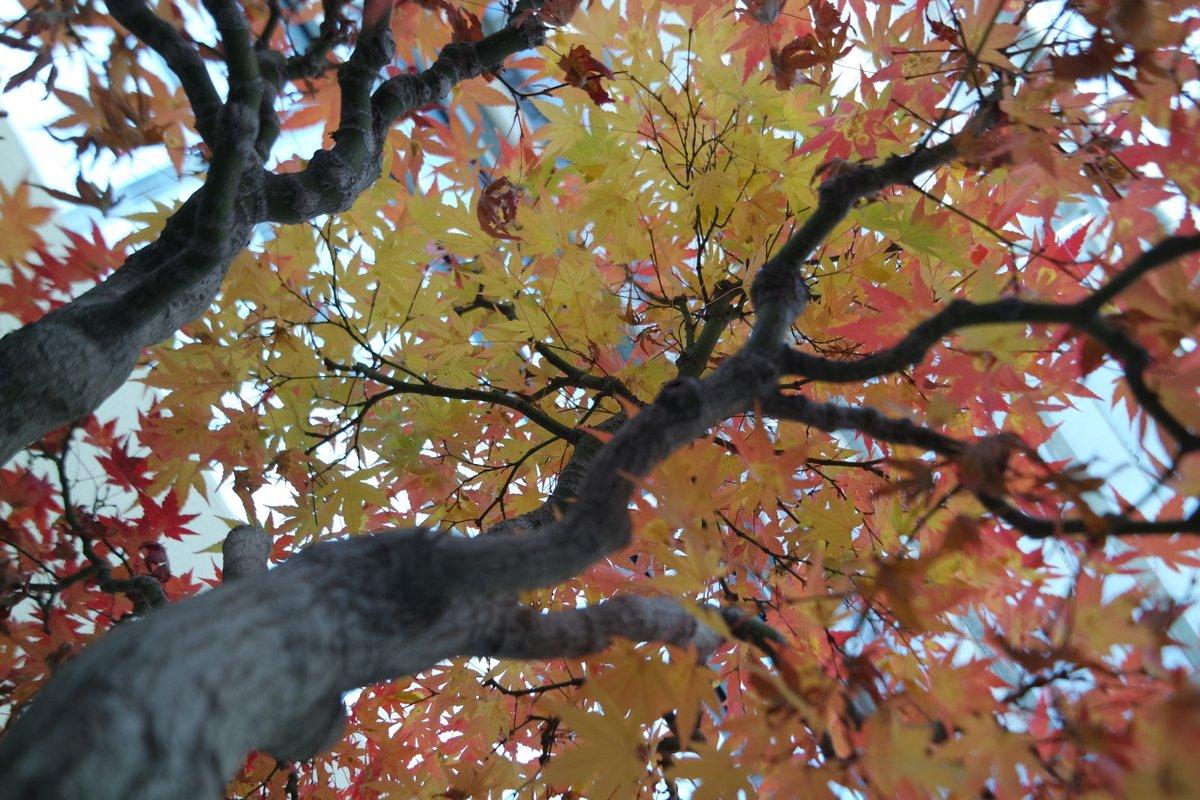 bonsai - 23 nov 2014