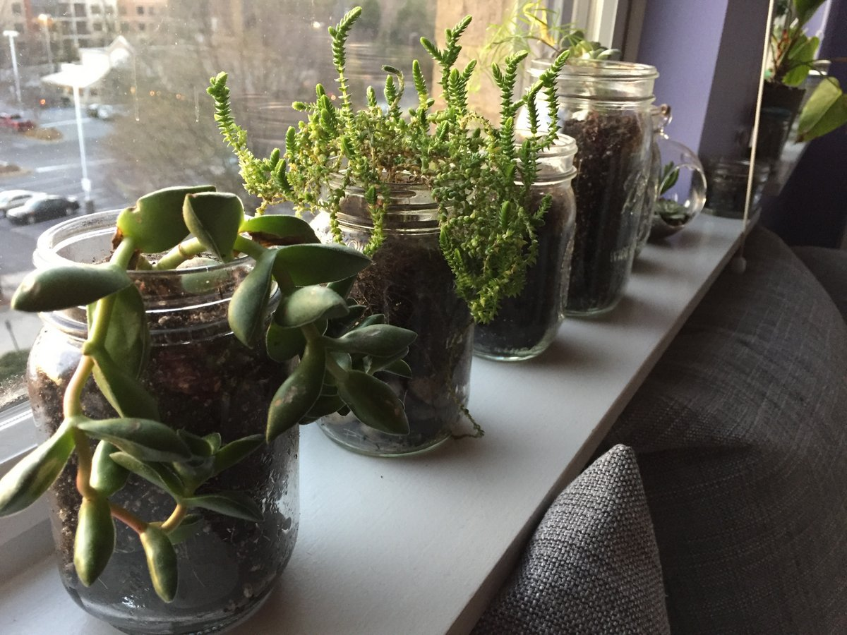 plants - 26 feb 2017