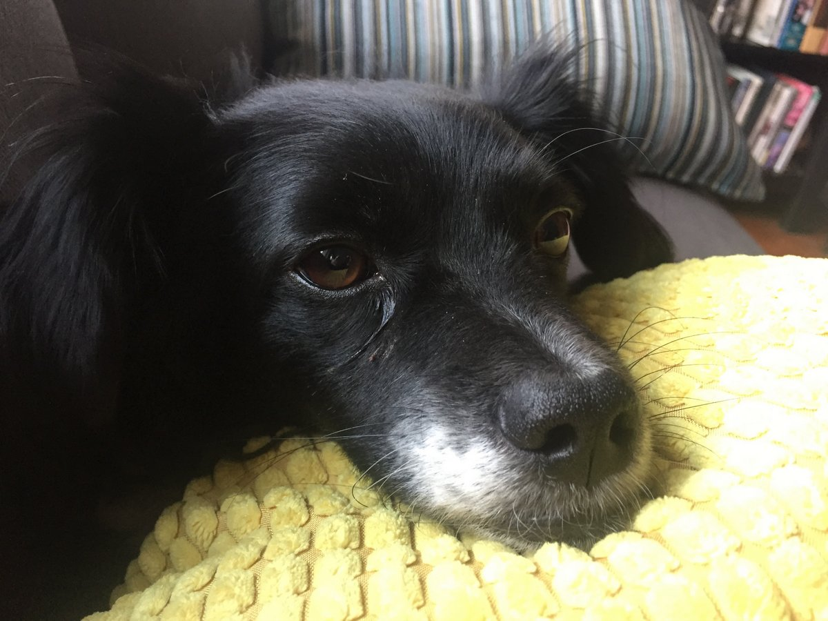 puppy- 23 mar 2017