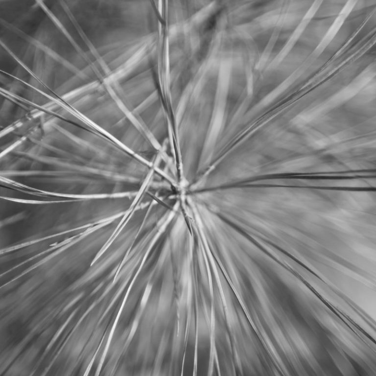 needles - 11 nov 2016