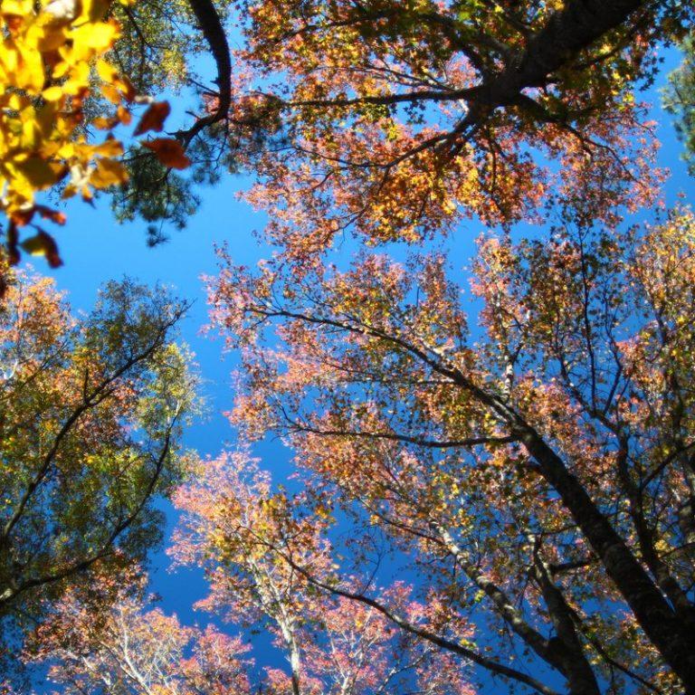 leaves - 19 nov 2016