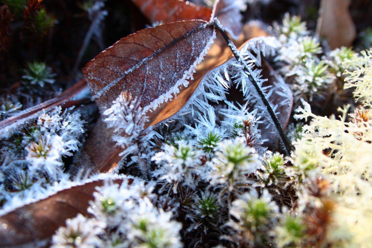 frost - 8 jan 2017