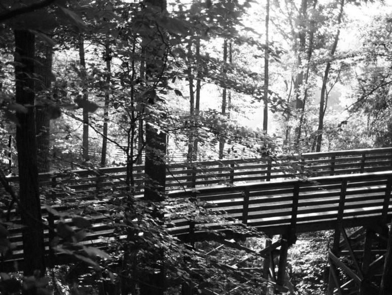 trail - 9 jul 2017