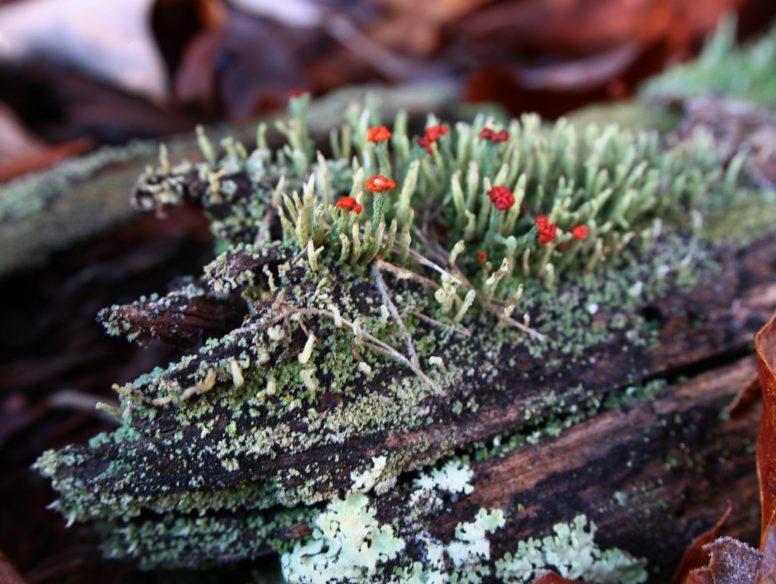 lichens - 24 nov 2017