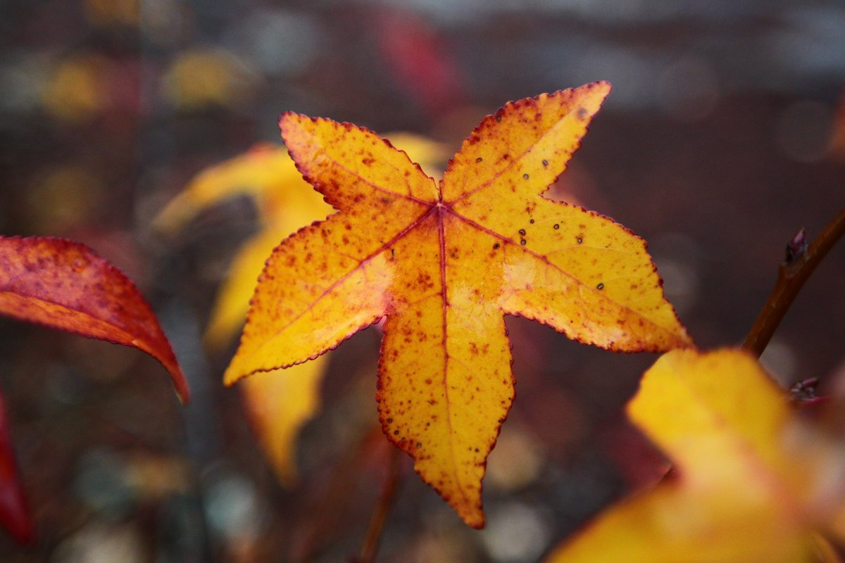 leaf - 8 dec 2017